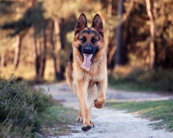 Своевременная дегельминтация — залог здоровья собаки