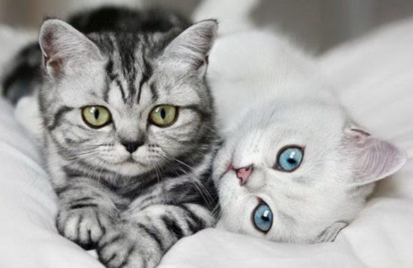 Коты болеют акне чаще кошек