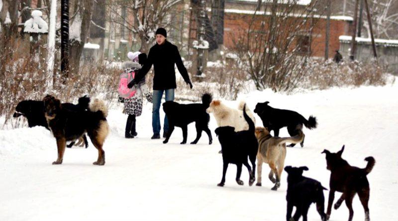 Если к вам подбегает стая бродячих собак,желательно стоять смирно, спокойно, без страха