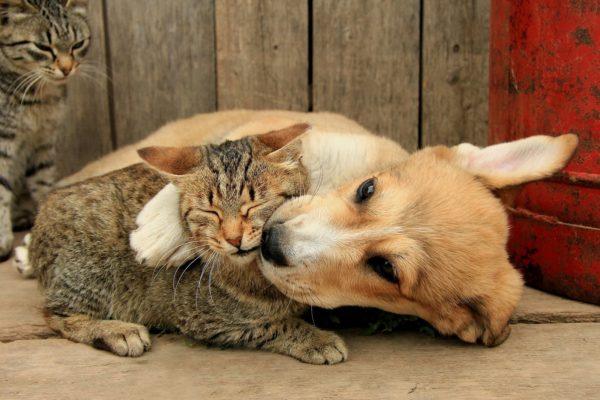 Собаки меньше подвержены акне, чем кошки