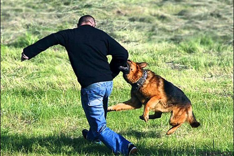 Не позволяйте собаке сбивать вас с ног