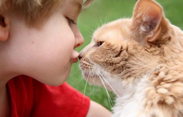 В первую очередь гельминты от котов передаются детям