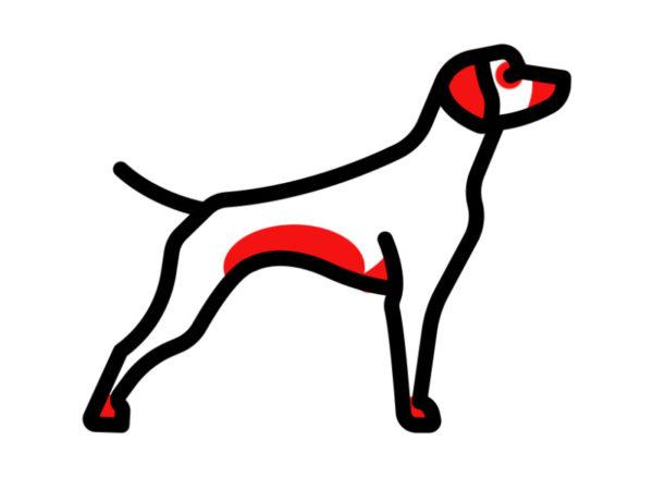 Красным цветом выделены участки тела, наиболее подверженные аллергическим проявлениям