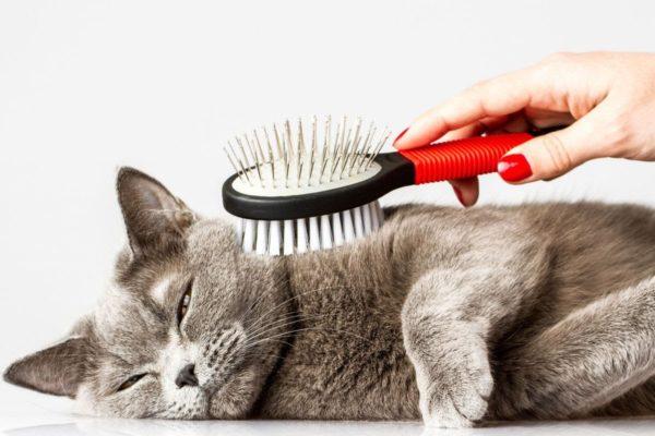 Помимо медикаментов и пищевых добавок коту необходим надлежащий уход