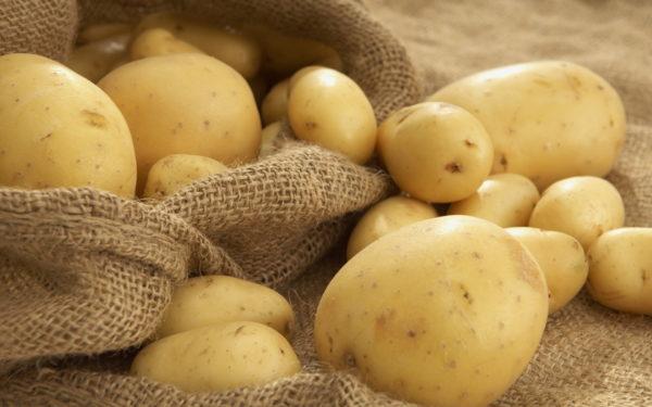 Употребление картофеля запрещено как малышам, так и взрослым особям