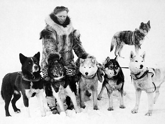 1915-й год: собаки-прародители хасок