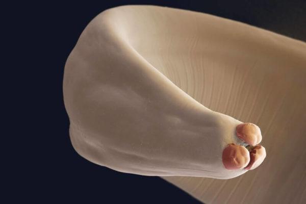 Аскарида ежедневно откладывает 200000 яиц