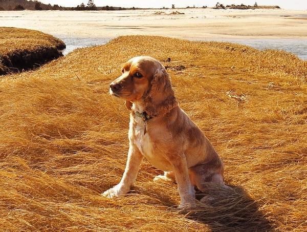 Собака, которая питается правильно, всегда полна энергии