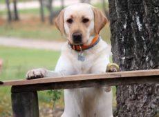 Невоспитанный пес может принести массу проблем себе и окружающим