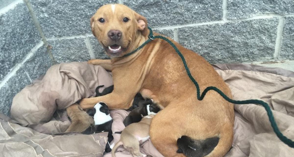В первые дни жизни щенков,«мама» не рискует далеко уйти от них