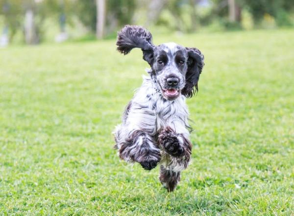 Взрослые собаки черпают энергию из разнообразного питания
