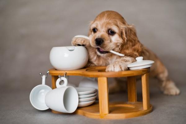 Правильно подобранное питание - залог здоровой жизни щенка