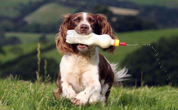 У собаки всегда должен быть доступ к свежей воде