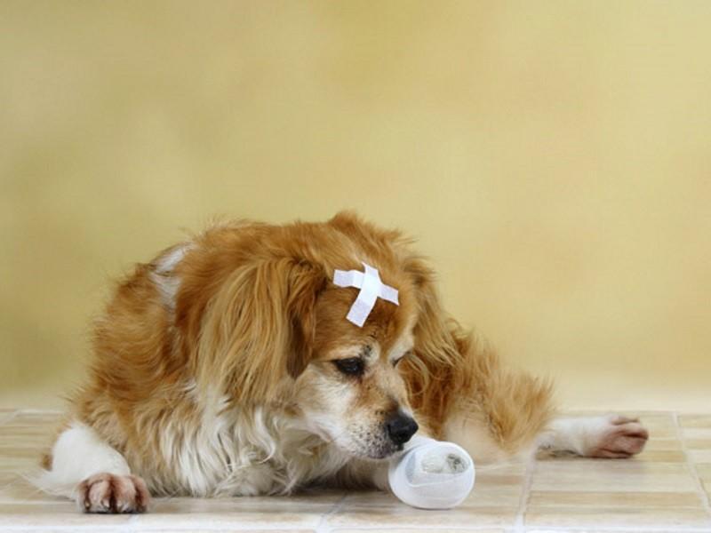 Обработка раны у собаки
