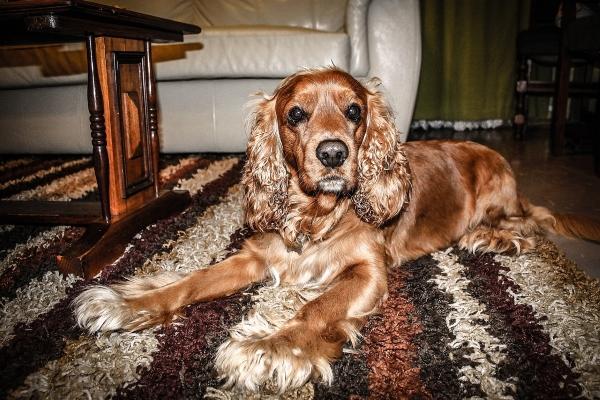 В питании собаки важно как его качество, так и количество корма