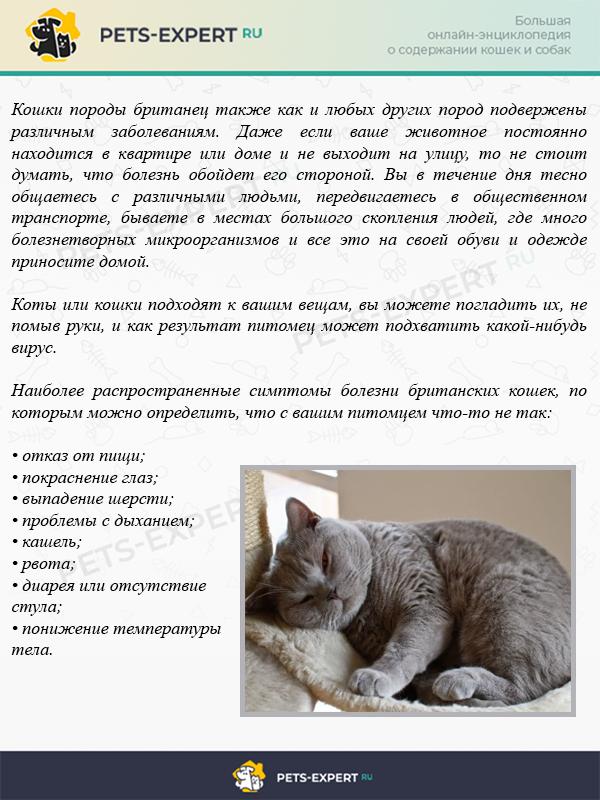 8 симптом болезней британских кошек
