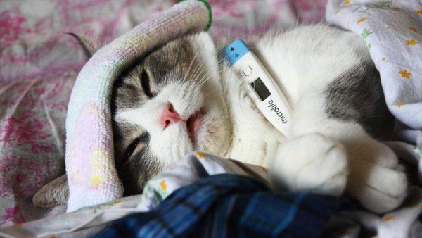 Для асцита не характерно увеличение температуры тела