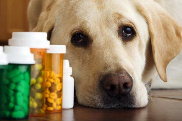 Дегельминтация — обязательная мера защиты животного от паразитов