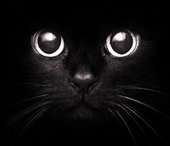 Несмотря на то, что такие кошки ежедневно «встают на пути» своих владельцев, это приносит им лишь счастье