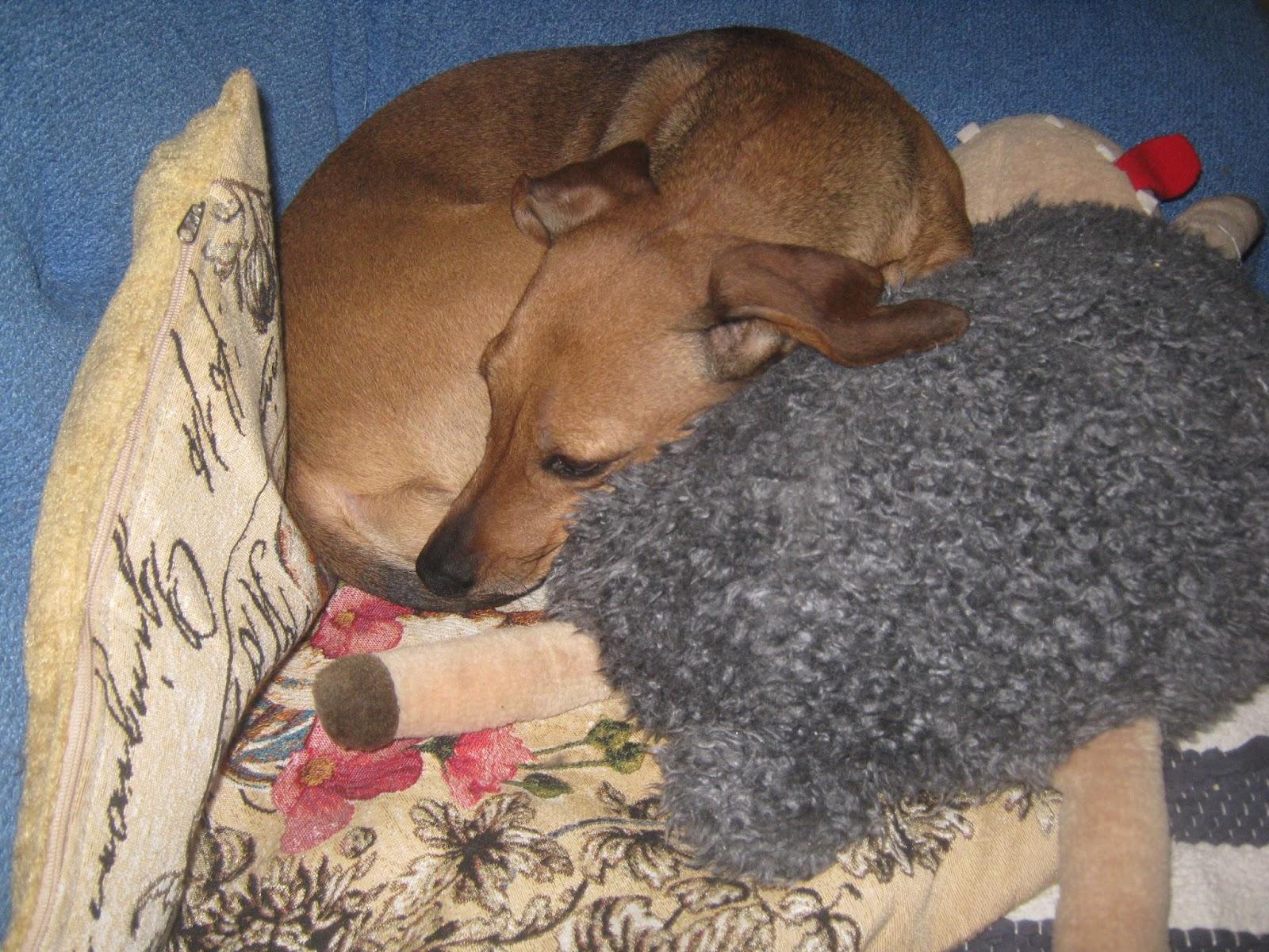 Собака на своем месте отдыха