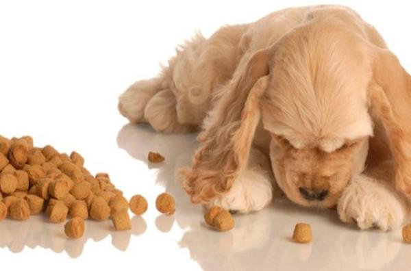 При формировании меню учитываются индивидуальные особенности организма собаки