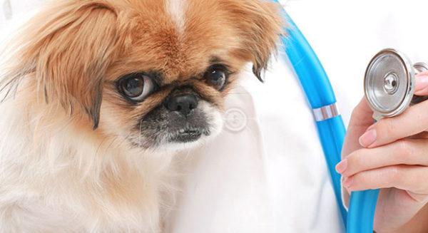 Чем быстрее вы дадите собаке активированный уголь, тем более легкими будут для нее последствия