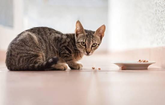 Контакт с посудой кошки может спровоцировать аллергическую реакцию
