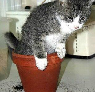Кот гадит в цветочный горшок