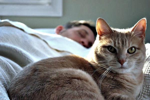 Питомцу придется отказать в посещении кровати