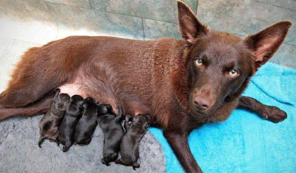 Новорожденные щенки с матерью