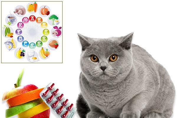 Любому живому организму необходимы витамины в нужном соотношении