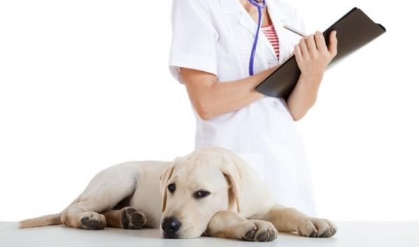Энтеросгель для собаки при отравлении