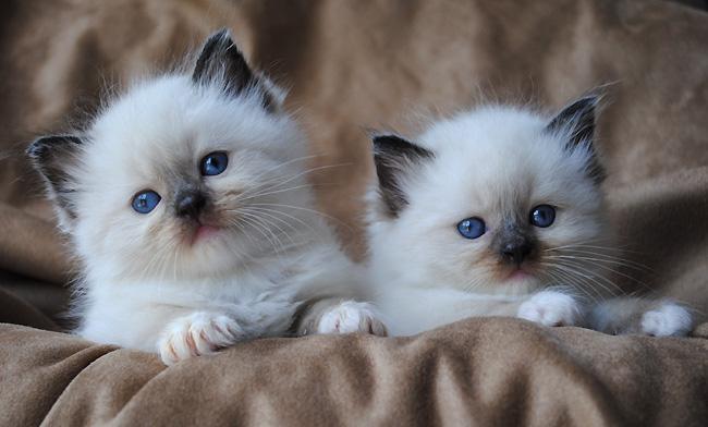 Агрессивное произнесение имени при наказании может отпугнуть котенка от этого сочетания звуков