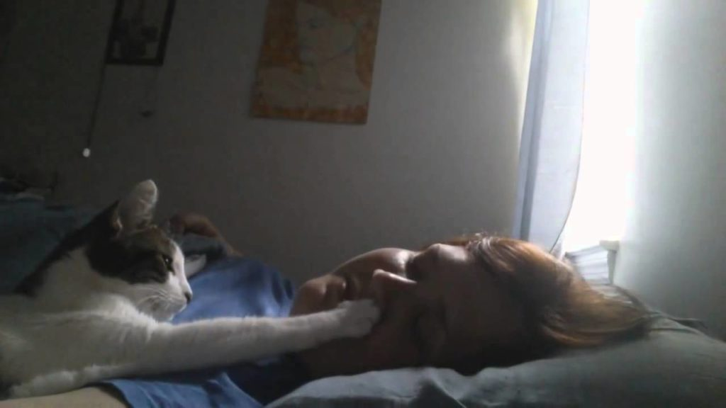Агрессивные действия хозяина выглядят неадекватными и бессмысленными в представлении кота