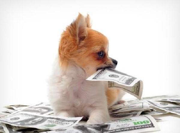 Алиментный щенок: что это значит?