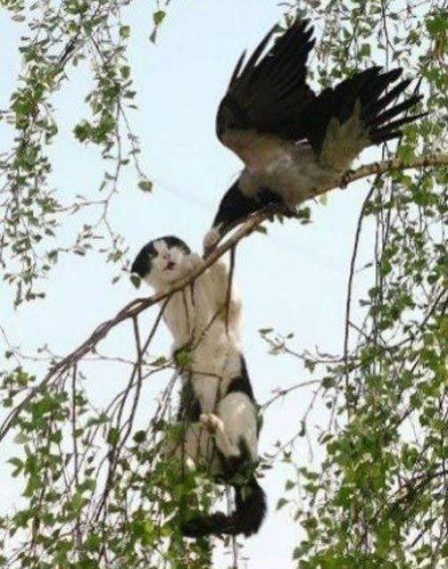 Атака вороны