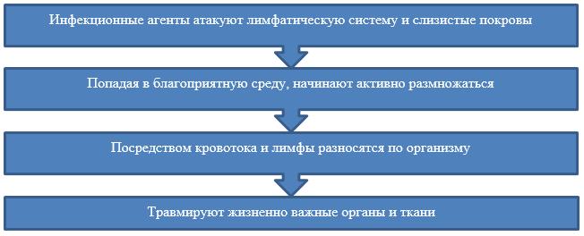 Принцип действия вируса