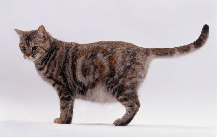 Любимица беременна...Как принять роды у кошки?