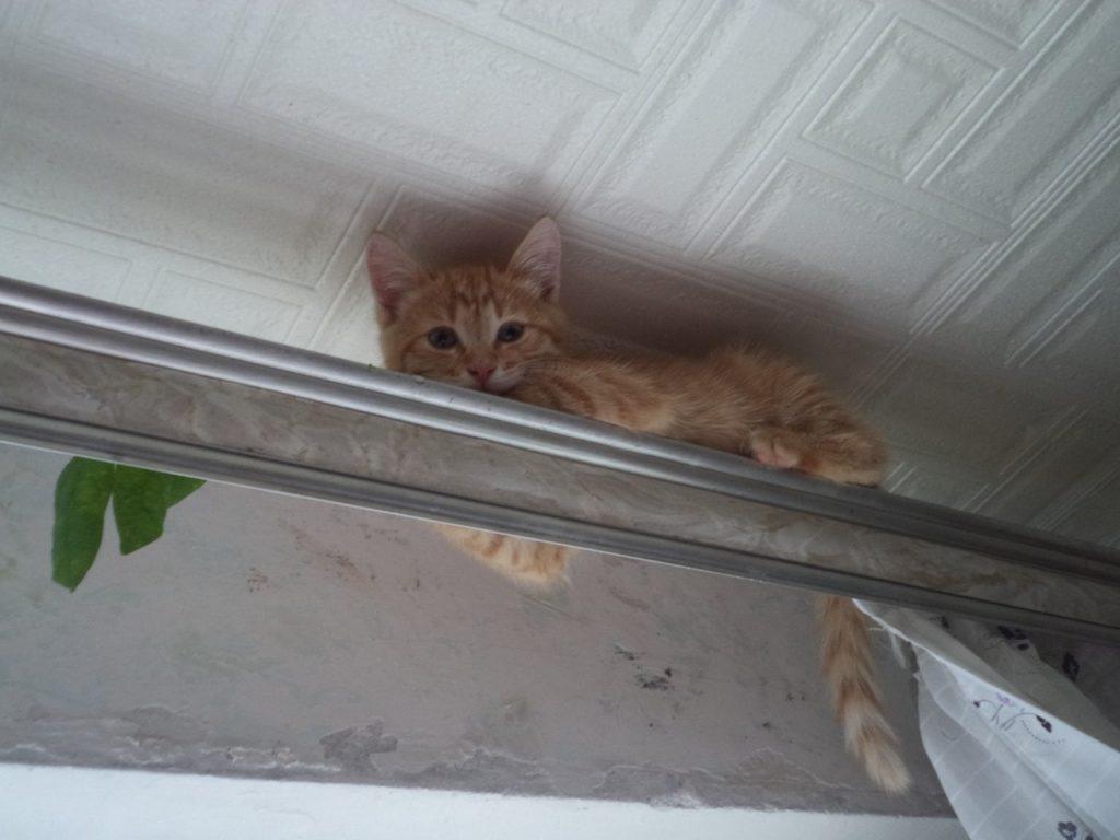 Благодаря когтям, коты могут добираться до таких мест, о которых хозяин даже не догадывается