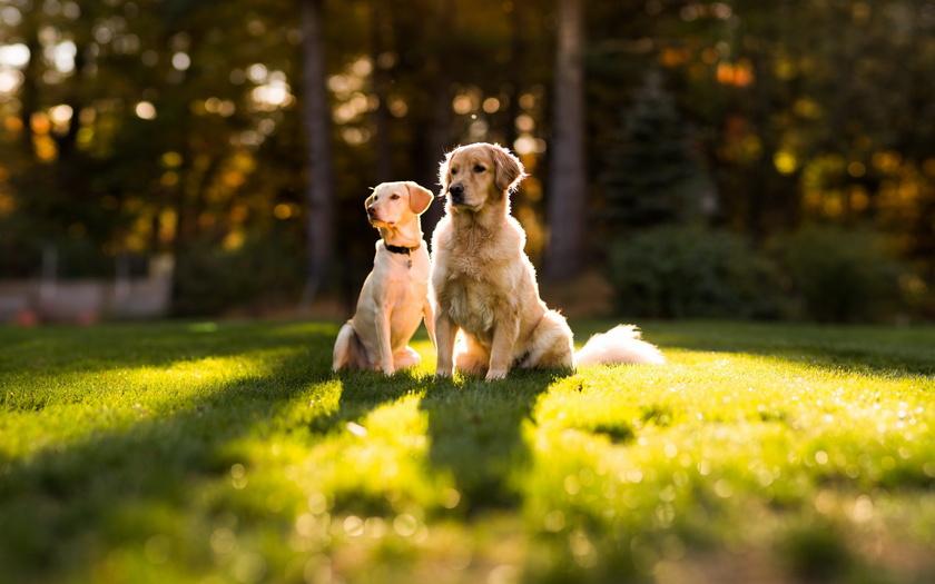 Благодаря совместным прогулкам собаки лучше узнают друг друга в расслабленной обстановке