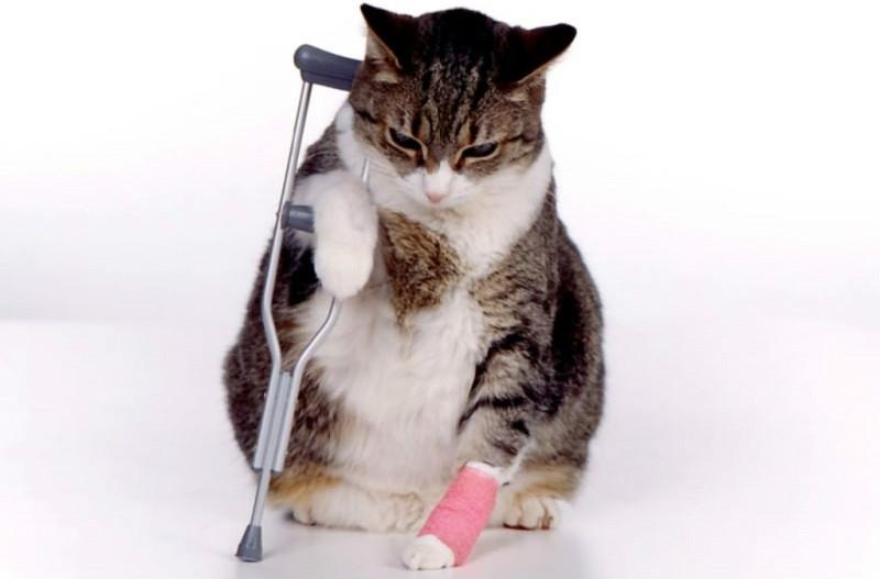 Боли в костях изменяют поведение животного в худшую сторону
