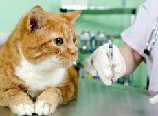 Бронхит у кошек: симптомы и лечение
