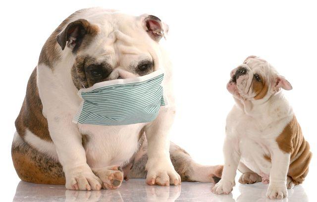 Бронхит у собак: симптомы и лечение