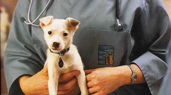 В зависимости от этапа развития патологии ветеринар назначает необходимую комбинацию препаратов