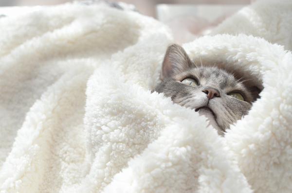 Важно соблюдать умеренность в этом пункте - кот не должен потеть под несколькими слоями ткани