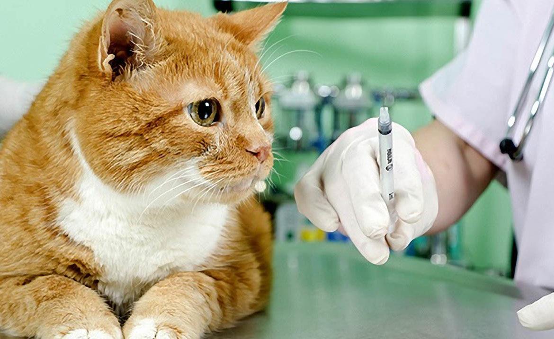 Вакцинации позволят привести ослабленный иммунитет питомца в норму