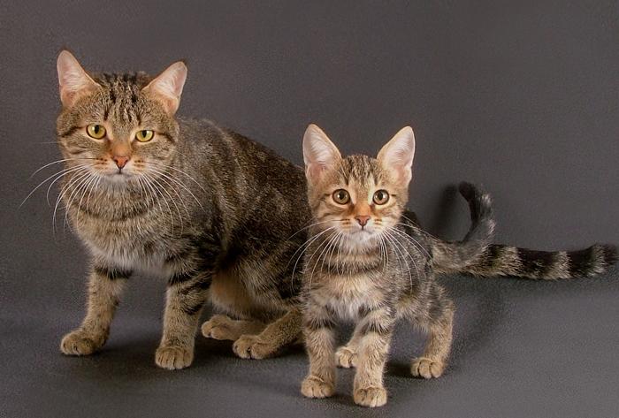 Взрослая особь и котёнок