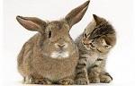 Взрослый кролик и котёнок