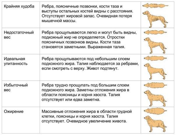 Виды веса собаки