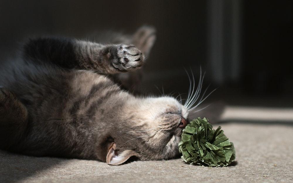 Витамины позволяют коту держать свой организм в тонусе
